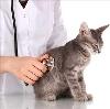 Ветеринарные клиники в Ивангороде